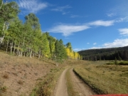 green_and_yellow_aspens