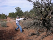 getting_past_a_fallen_tree