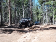 jeeps_on_the_trail