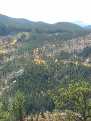 yellow_aspens