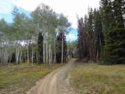 aspens_and_evergreens