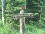 sheephorn_sign