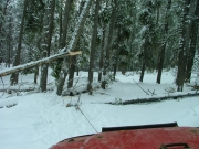 winching_the_big_tree_out_of_the_way