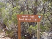 north_fork_of_coal_wash