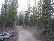 through_trees
