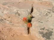 desert_flower_part_1
