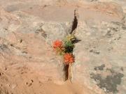 desert_flower_part_1