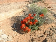 desert_flower_part_2