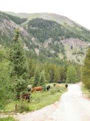 cows_part_2