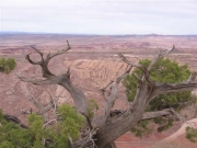 gnarled_tree_at_the_top