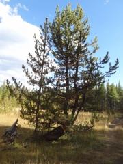 interesting_tree