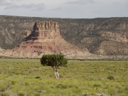 chimney_rock_and_tree