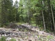 cabin_remnants