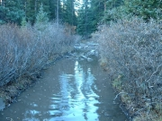 muddy_water