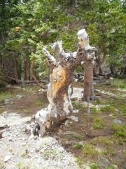 weird_tree