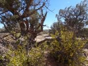 desert_life