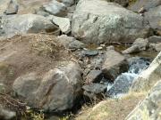 tiny_french_creek
