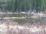 beaver_ponds_part_1
