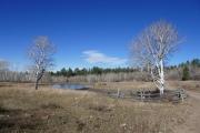 cattle_pond