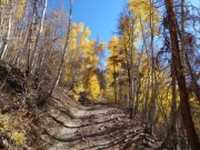 climbing_through_aspens