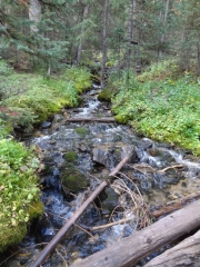 grizzly_gulch_creek