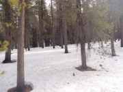snow_and_trees