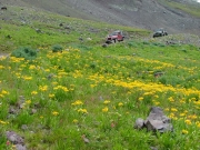 jeeps_in_wildflowers