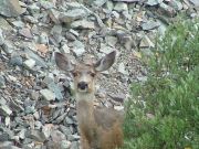 deer_part_1