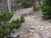 bumpy_climb