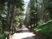 easy_trail