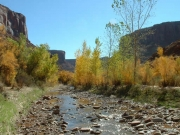 water_in_the_canyon