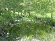water_bog