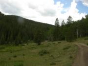 through_the_meadow
