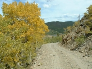 aspens_on_the_trail