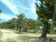 weird_trees