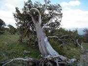 enchanted_tree
