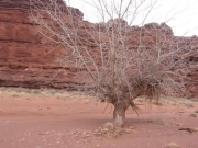 dead_tree