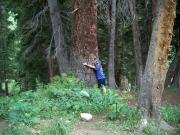 tree_hugger_patrick