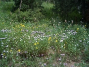 wildflowers_part_1