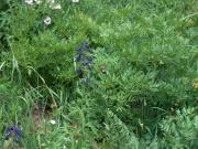 wildflowers_part_3