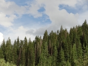 clouds_and_healthy_trees