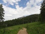 wandering_trail