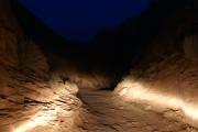 trail_in_the_dark