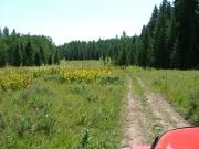 lush_meadow