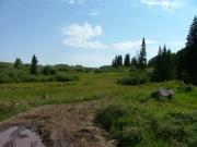 meadow_crossing