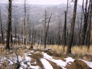 trail_through_the_dead_trees_part_2