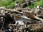 creek_water