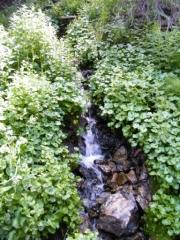 running_water