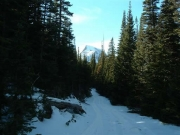trail_with_snowy_mountain