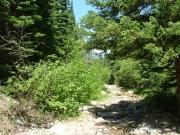 leafy_trail